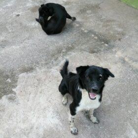 สุนัขเฝ้าบ้าน VS สุนัขล่าเนื้อ