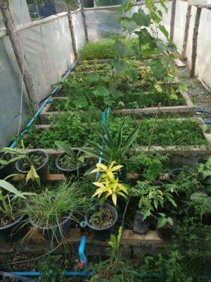 แปลงผักและแปลงต้นไม้ครับ