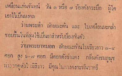 """คำบรรยาย """"ว่านพระดำ"""" จากหนังสือ ตำราสรรพคุณยาไทย ว่าด้วยลักษณะกบิลว่าน : นายไพทูรย์ ศรีเพ็ญ หน้า ๘๒"""